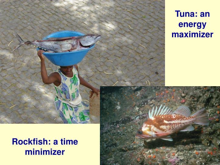 Tuna: an energy maximizer