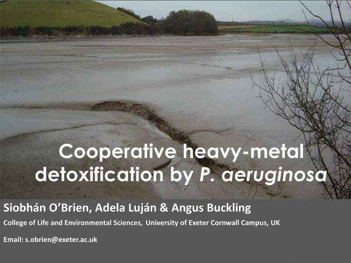 Cooperative heavy metal detoxification by p aeruginosa