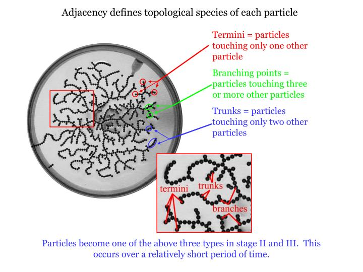 Adjacency defines topological species of each particle