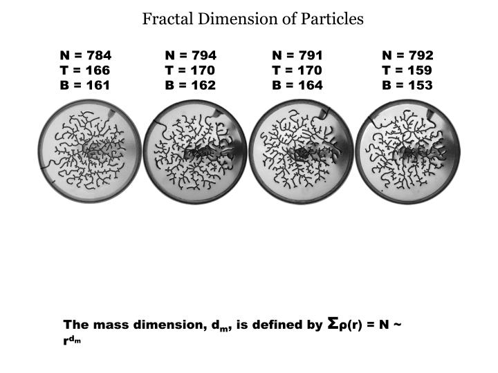 Fractal Dimension of Particles