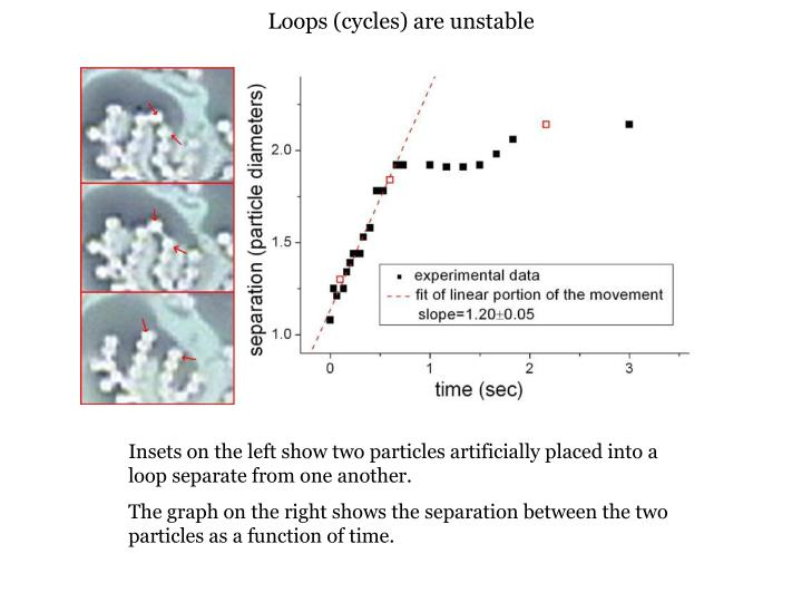Loops (cycles) are unstable