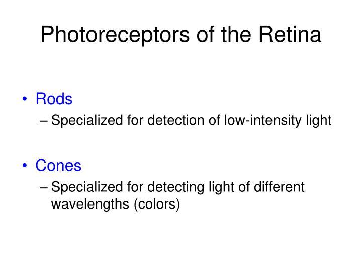 Photoreceptors of the Retina