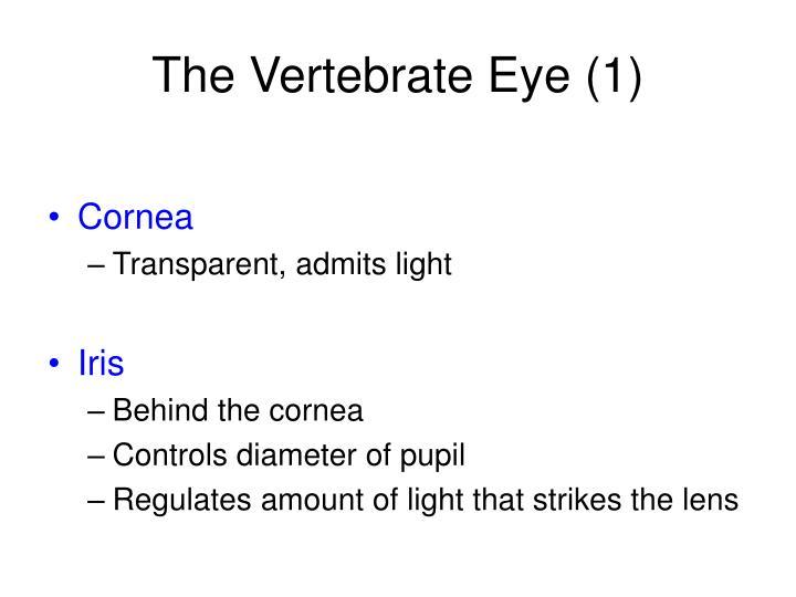 The Vertebrate Eye (1)