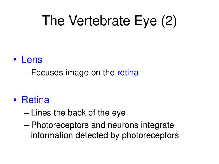 The Vertebrate Eye (2)
