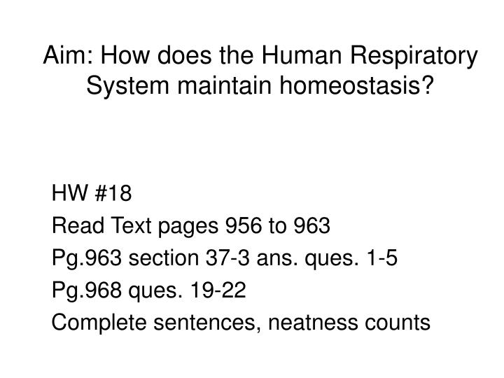 aim how does the human respiratory system maintain homeostasis n.