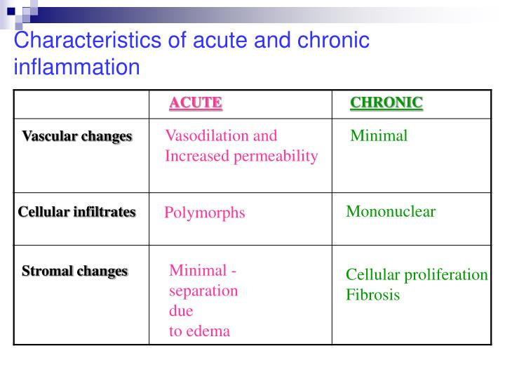 Characteristics of acute and chronic inflammation