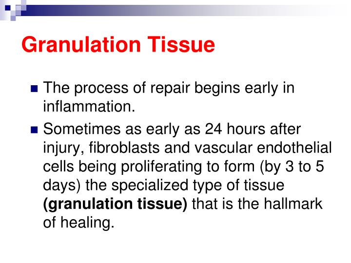Granulation Tissue