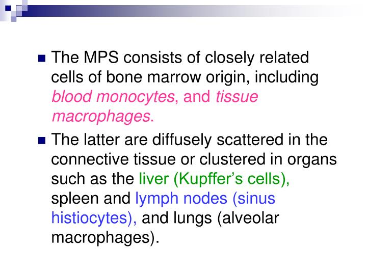 The MPS consists of closely related cells of bone marrow origin, including