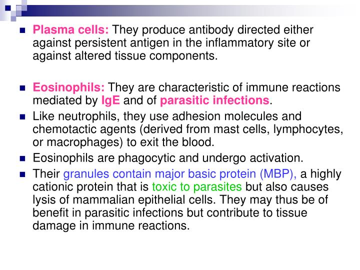 Plasma cells:
