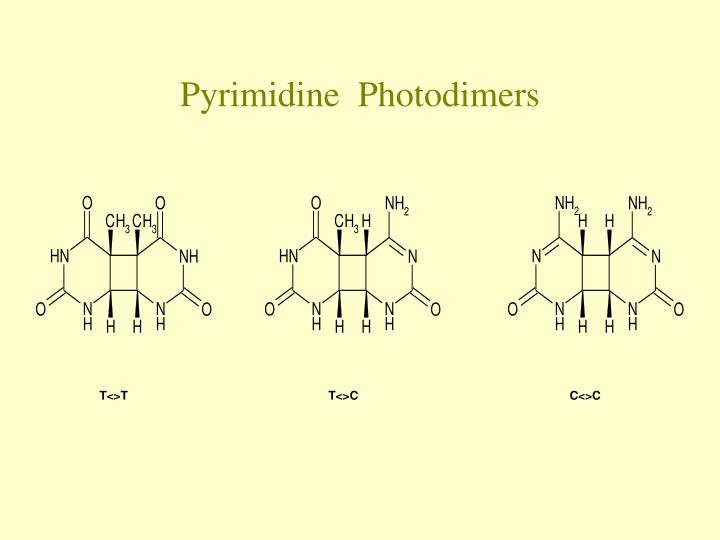 Pyrimidine photodimers