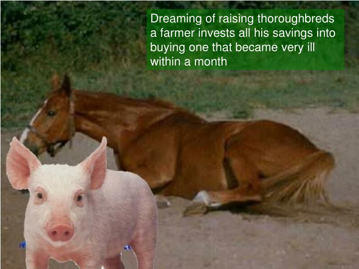 Dreaming of raising thoroughbreds a farmer invests all his savings into buying one that became very ...