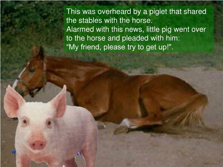 This was overheard by a piglet that shared the stables with the horse.