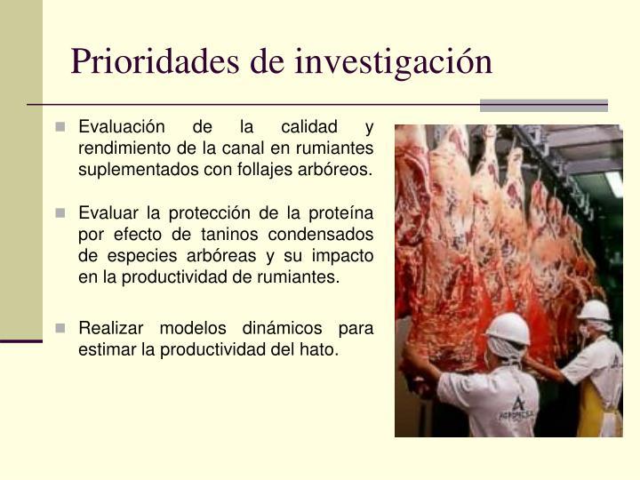Prioridades de investigaci n1