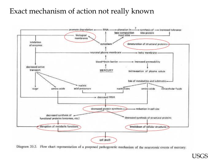 Exact mechanism of action not really known