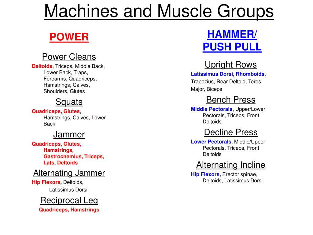 PPT - Study Guide for Weight Training Final Exam PowerPoint