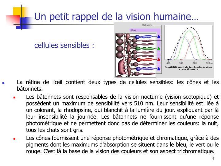 Un petit rappel de la vision humaine…