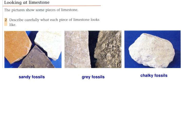 Chalky fossils