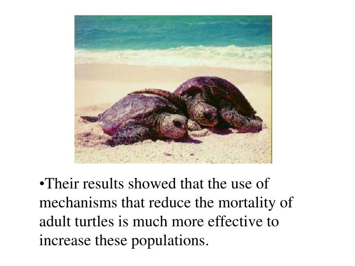 Their results showed that the use of mechanisms that reduce the mortality of adult turtles is much more effective to increase these populations