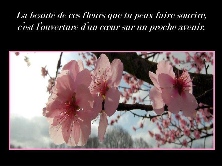 La beauté de ces fleurs que tu peux faire sourire, c'est l'ouverture d'un cœur sur un proche avenir.
