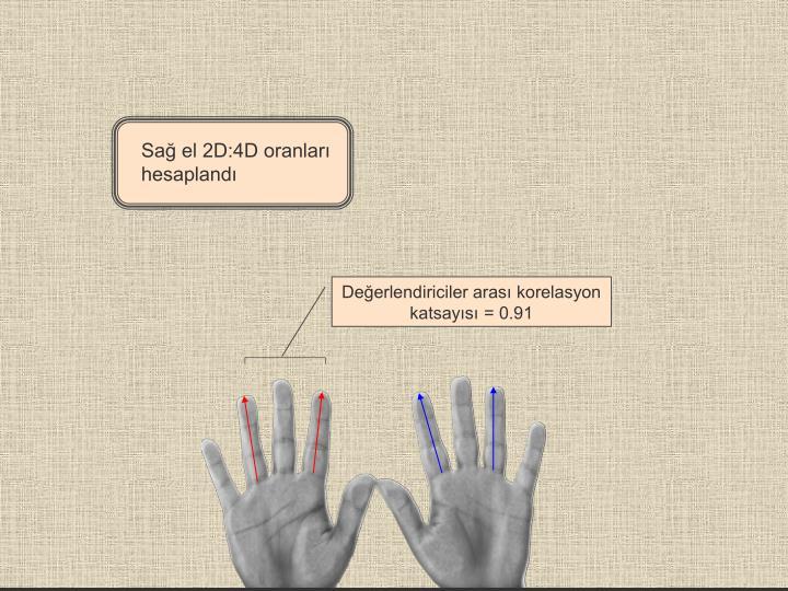Sağ el 2D:4D oranları