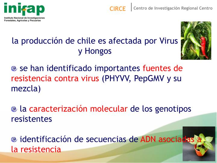 la producción de chile es afectada por Virus y Hongos