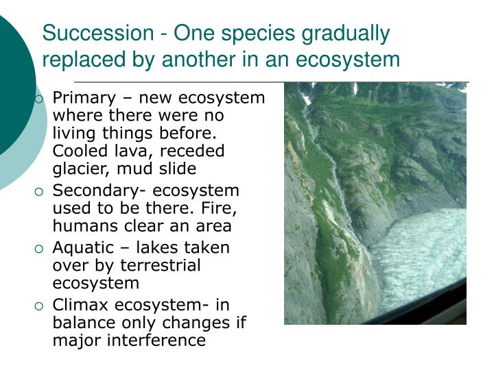 Succession - One species gradually replaced by another in an ecosystem
