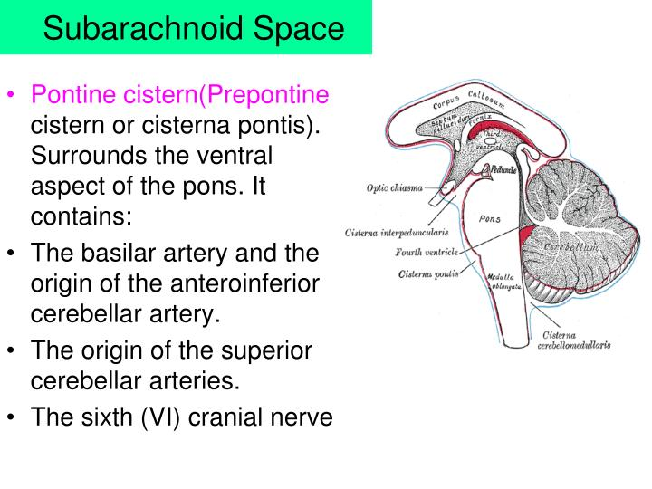 PPT - Meninges, CSF & Ventricular system PowerPoint ...