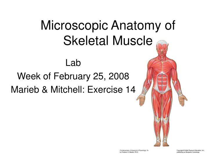 PPT Microscopic Anatomy Of Skeletal Muscle PowerPoint