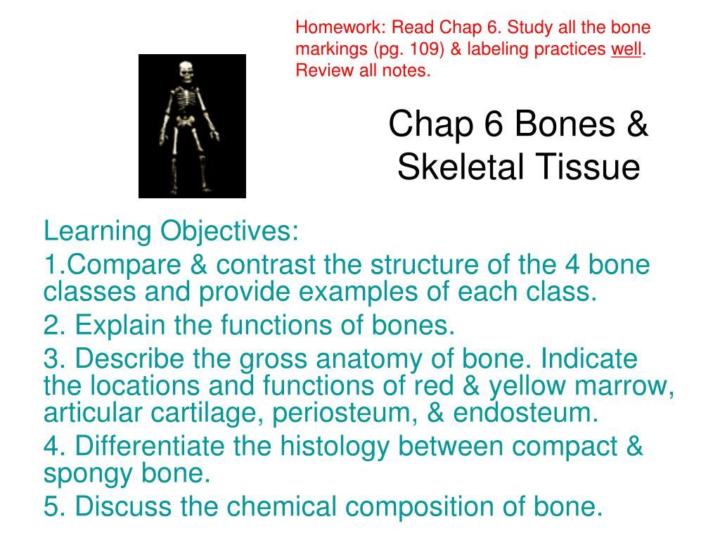 Ppt Chap 6 Bones Skeletal Tissue Powerpoint Presentation Id