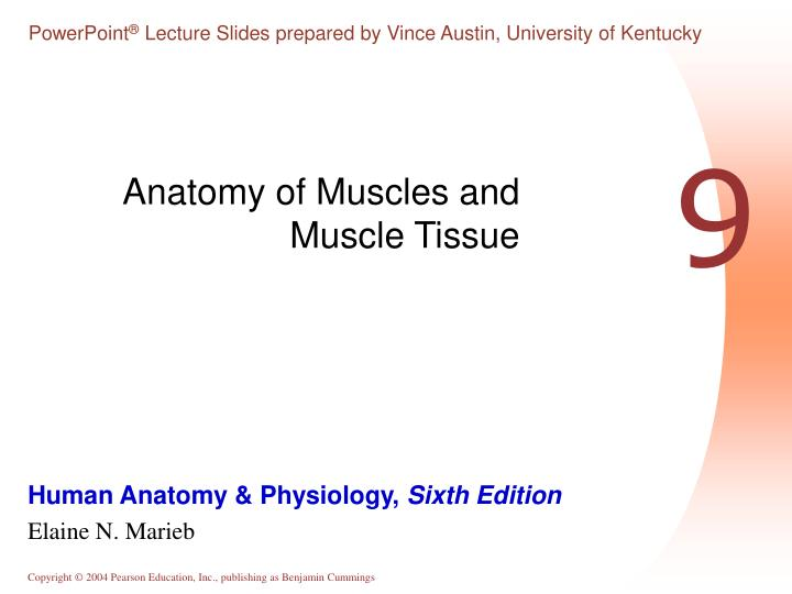 Ppt Anatomy Of Muscles And Muscle Tissue Powerpoint Presentation