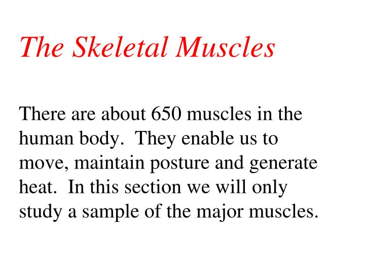 The Skeletal Muscles