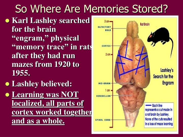 So Where Are Memories Stored?