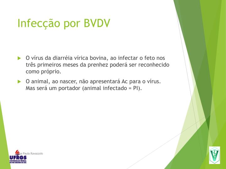 Infecção por BVDV