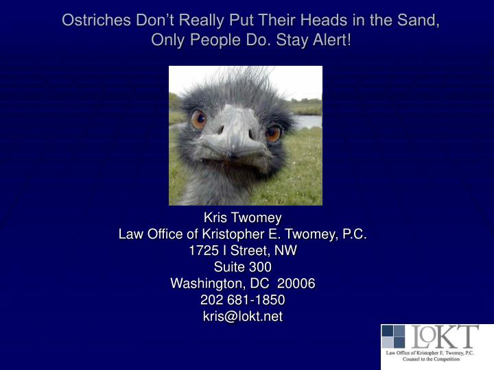 Ostriches Don't Really Put Their Heads in the Sand,