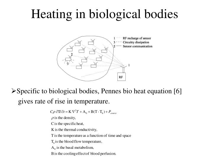 Heating in biological bodies