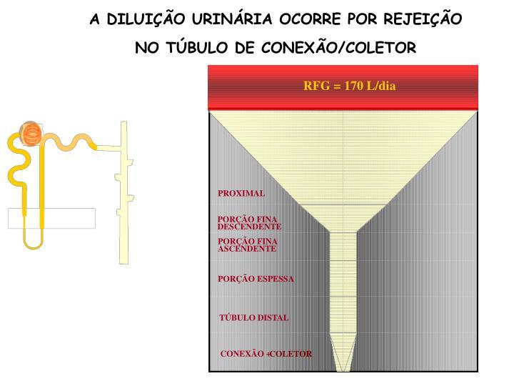 A DILUIÇÃO URINÁRIA OCORRE POR REJEIÇÃO NO TÚBULO DE CONEXÃO/COLETOR