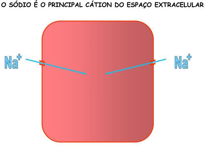 O SÓDIO É O PRINCIPAL CÁTION DO ESPAÇO EXTRACELULAR