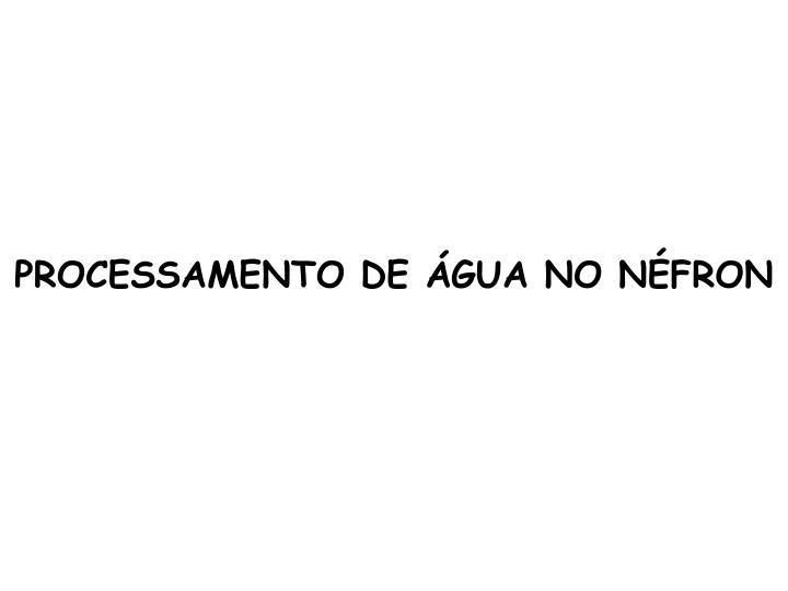 PROCESSAMENTO DE ÁGUA NO NÉFRON