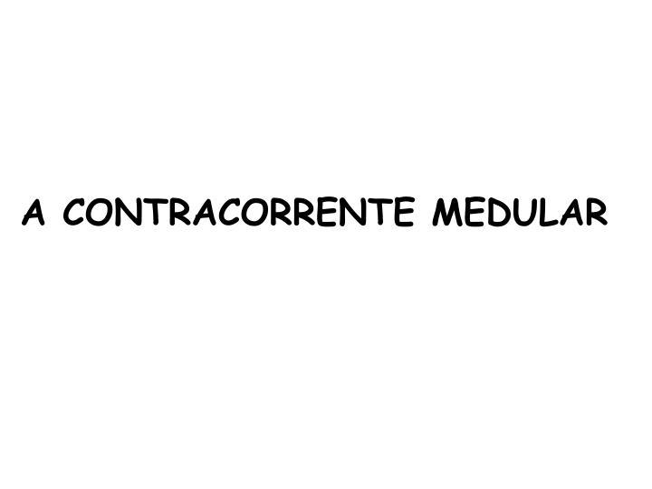 A CONTRACORRENTE MEDULAR