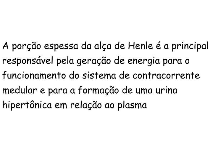 A porção espessa da alça de Henle é a principal responsável pela geração de energia para o funcionamento do sistema de contracorrente medular e para a formação de uma urina hipertônica em relação ao plasma