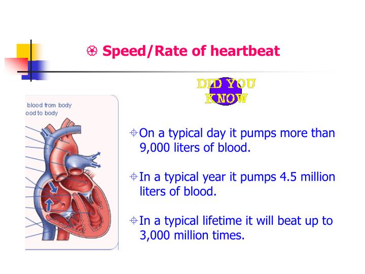  Speed/Rate of heartbeat