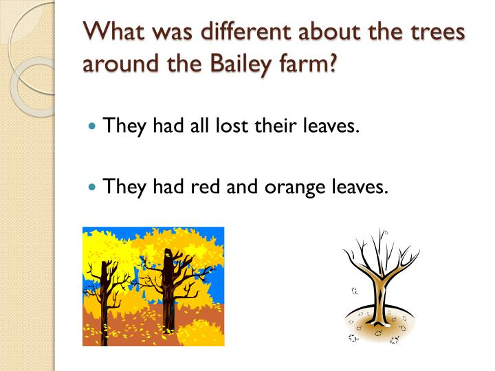 What was different about the trees around the Bailey farm?