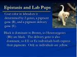 epistasis and lab pups