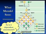what mendel sees