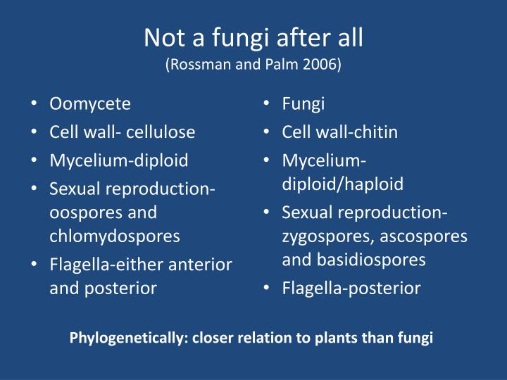Not a fungi after all rossman and palm 2006
