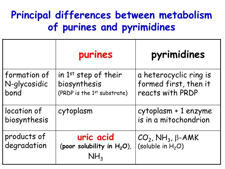 Principal differences between metabolism of purines and pyrimidines