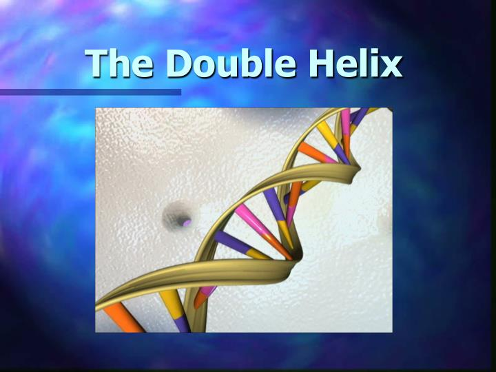 the double helix n.