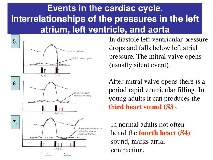 Events in the cardiac cycle. Interrelationships of the pressures in the left atrium, left ventricle, and aorta
