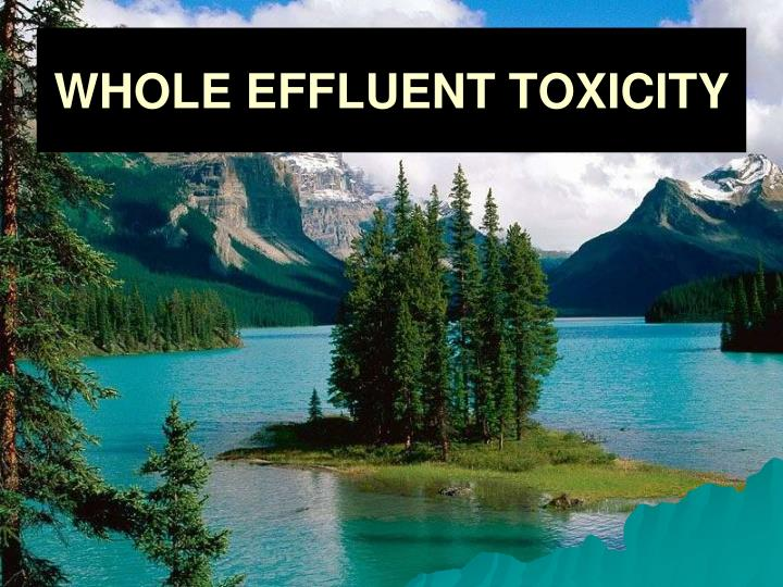 whole effluent toxicity n.