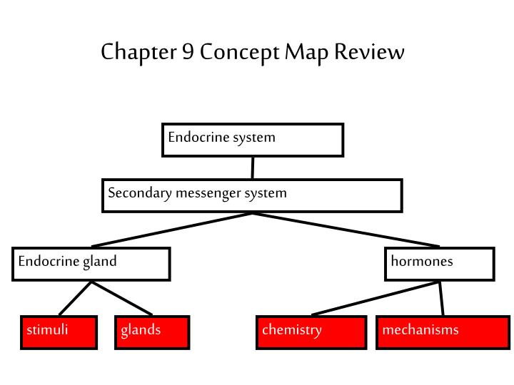 Hormone Concept Map.Ppt Bell Work 3 10 Powerpoint Presentation Id 6590661